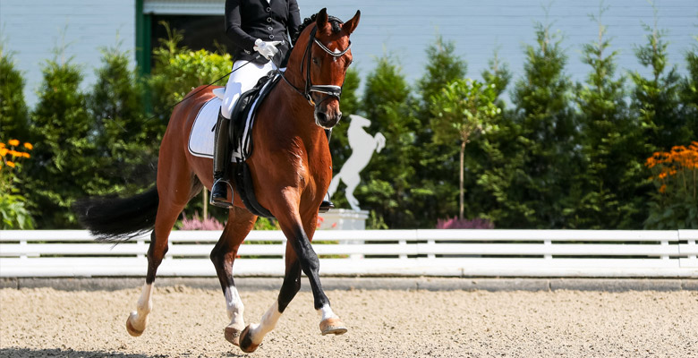 competitions-equestres
